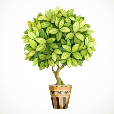 Grüner dekorativer kleiner Baum im Topf lokalisiert auf weißem Hintergrund Vektorgrafik