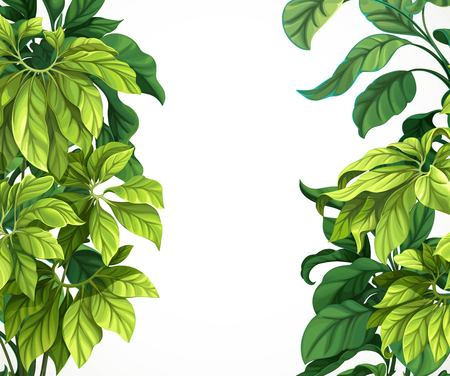 Tropical leaf frame isolated on white background