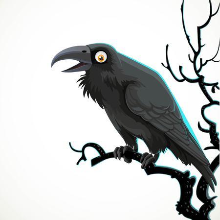 Cuervo negro se sienta en la rama de un árbol aislado sobre un fondo blanco.