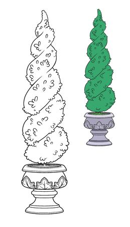 Figure-trimmed bush in a garden flowerpot color and outlined for coloring Illustration