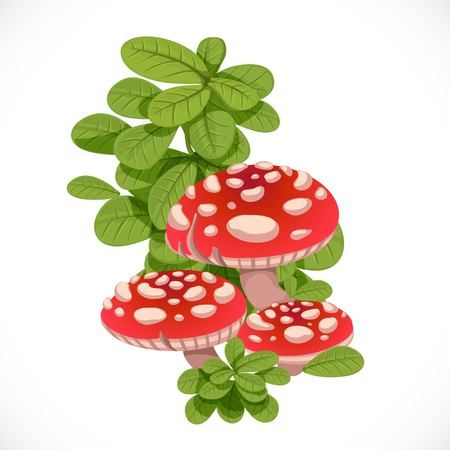Red amanita mushrooms in the green grass isolated on white background