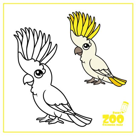 Cute cartoon parrot color and outlined on a white  for coloring page