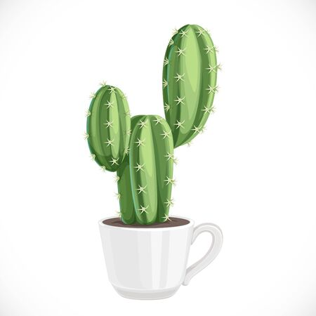 Prickly cactus planted in a white ceramic cup isolated on white background
