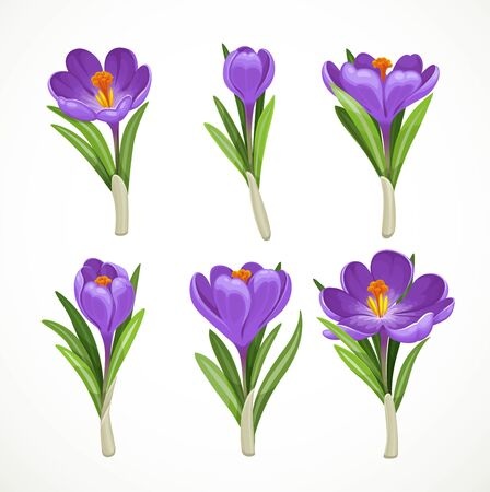 Beautiful purple vector crocuses separately one by one isolated on a white background Ilustracje wektorowe