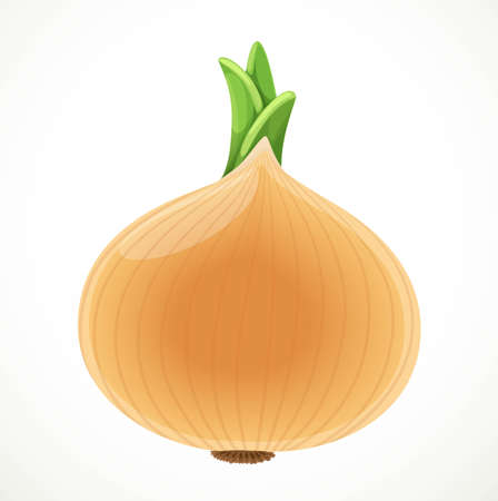 Golden onions isolated on white background Stock Illustratie