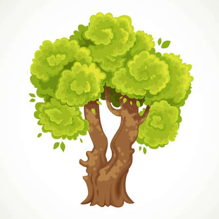 Summer big tree with a fork and lush green foliage vector drawing isolated on white background 向量圖像