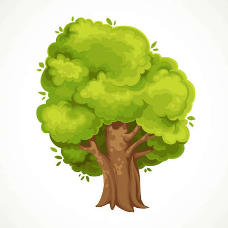 Summer big old tree with green foliage vector drawing isolated on white background