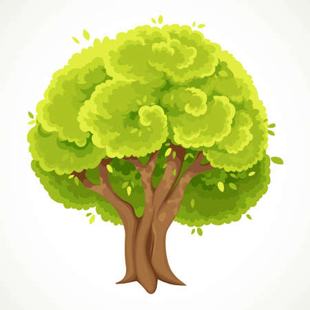 Summer tree with lush green foliage vector drawing isolated on white background