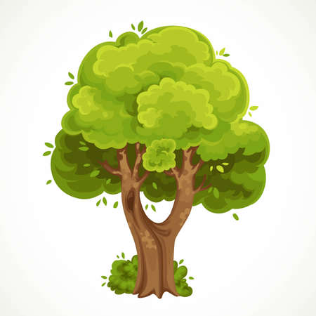 Summer big old tree with fork and green foliage vector drawing isolated on white background