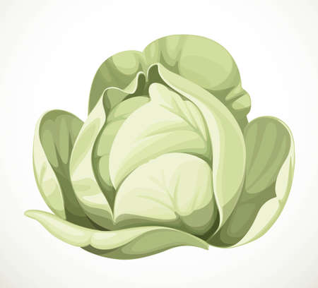 White cabbage isolated on white background