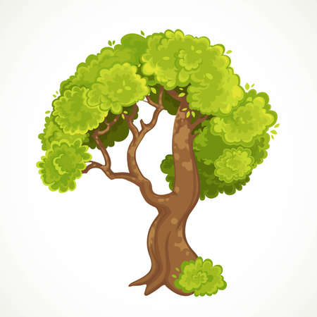 Summer old tree with green foliage vector drawing isolated on white background