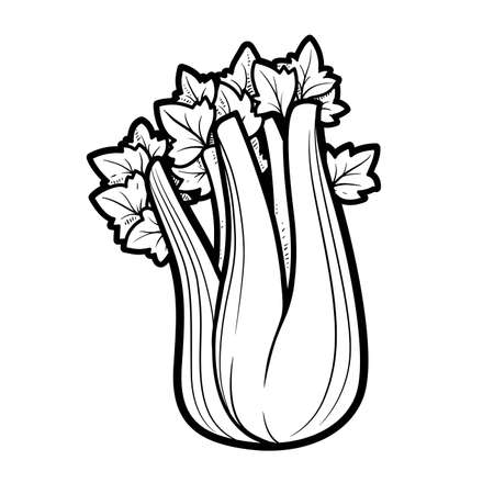 Stem of juicy celery linear drawing on white background
