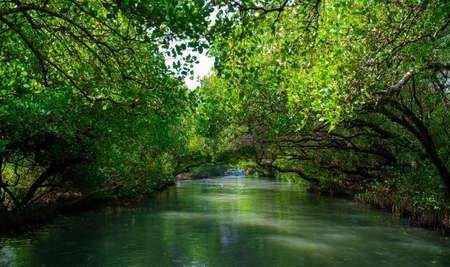 Sicao Mangrove Green Tunnel in Tainan,Taiwan. The Taiwan version of Amazon River.