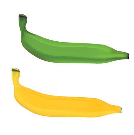 xwhite: green and yellow banana
