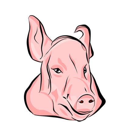 head pork on white background