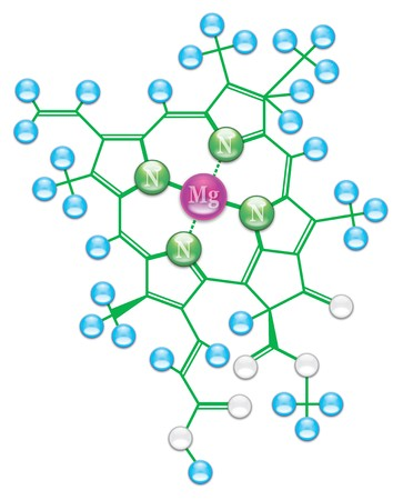 water molecule: F�rmula de clorofila II