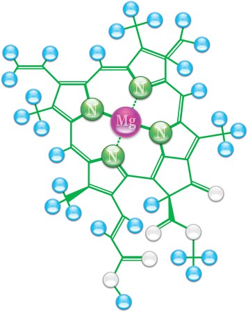 chemical plant: Chlorophyll formula I