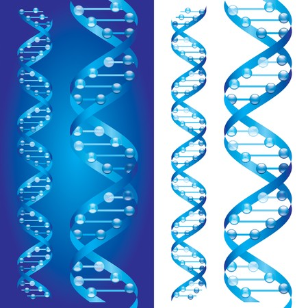 double helix: Blueprint D.N.A. chains on blue and white background Stock Photo