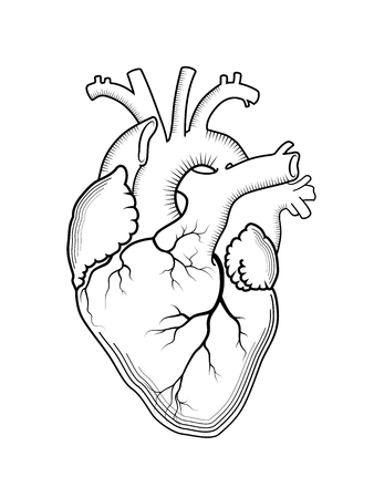 Heart. The internal human organ, Anatomical structure. Engraved print, outline detailed drawing. Illustration