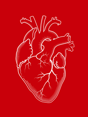 Heart. The internal human organ, Anatomical structure. Red detailed outline drawing, engraved print.