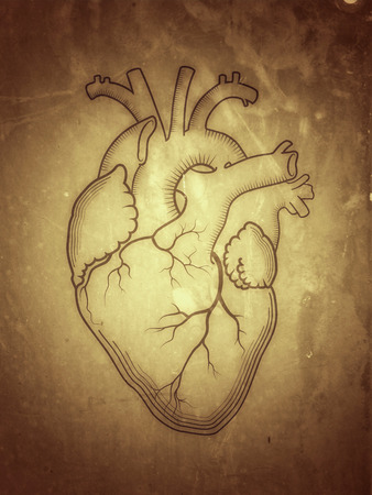 Heart. The internal human organ, Anatomical structure. Engraved print, outline detailed drawing. (Alternate grunge vintage remake).