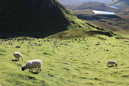Sheep on the hillside Stock Photo