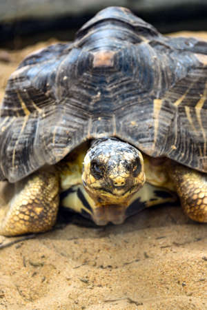 deceleration: The fierce eyes of a turtle in a zoo. Stock Photo