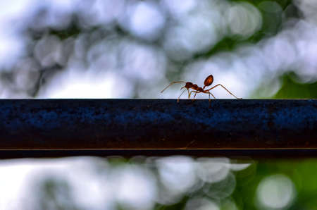 copys pace: Ants climb on the back of a metal bar bokeh.