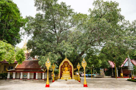 dhamma: In respect Buddha in Thailand
