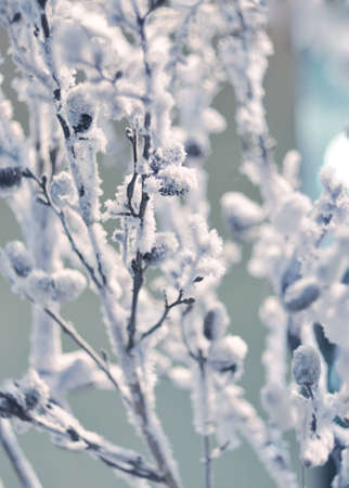 Winter background - the branches of trees covered with hoarfrost, close-up. photo