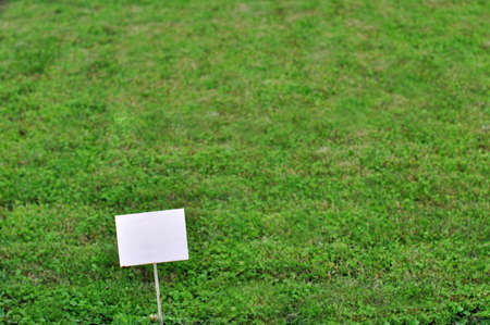 grassy plot: The white empty plate against a green lawn. Stock Photo