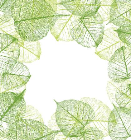 leaves frame: Vector Marco de las hojas Vectores
