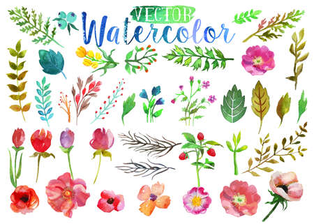 Vector watercolor aquarelle flowers and leaves. Imagens - 40430209