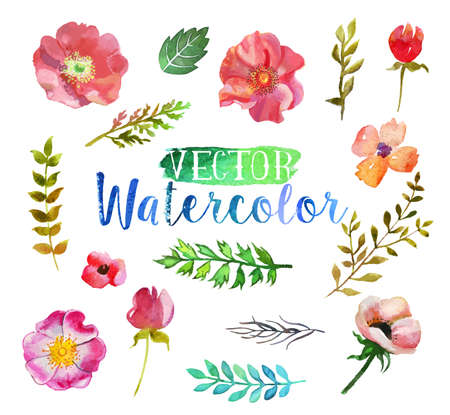 Vector watercolor hand drawn colorful flowers and leaves. The art paint on white background