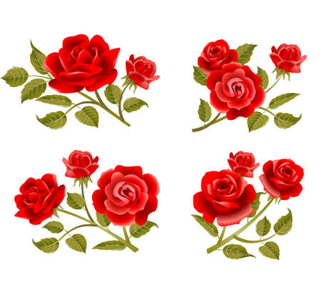 Vector rose buttonholes with pink, red and white roses. Vettoriali