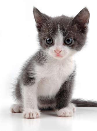 whiskar: Lovely kitten on a white background