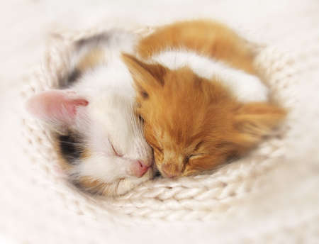 Two kittens sleep a heap. isolated on white background