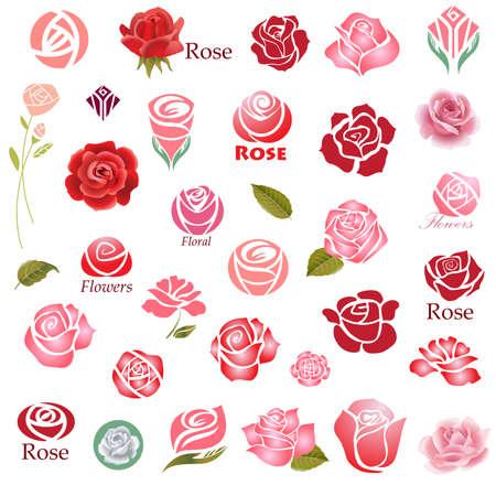 장미 꽃 디자인 요소의 집합