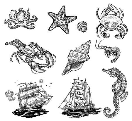 sea shell: Set of Sea life icons, vector black and white