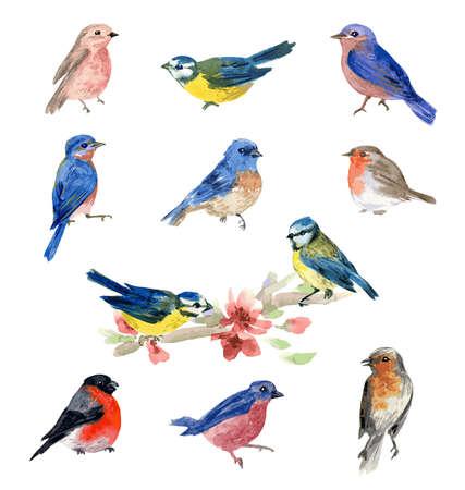 Aves de acuarela, colección de ilustraciones aisladas