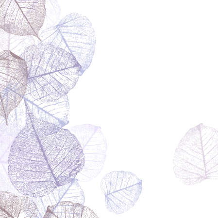 Festive winter background with frame of hoarfrost leaves, vector illustration,