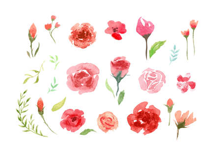 Watercolor aquarelle roses and leaves.
