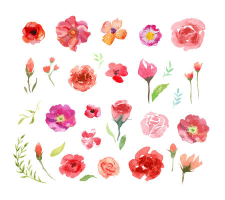 Watercolor roses and leaves, vector hand drawn colorful illustration.