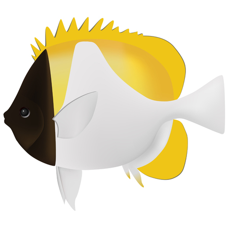butterfly fish: pyramid butterfly fish