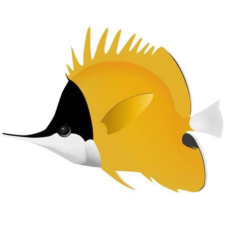 butterfly fish: big longnose butterfly fish Illustration