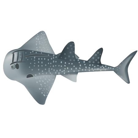 shark ray marine fish illustrator