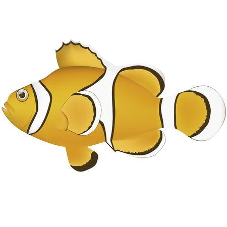 Fale clown anemonefish marine fish illustrator Illustration