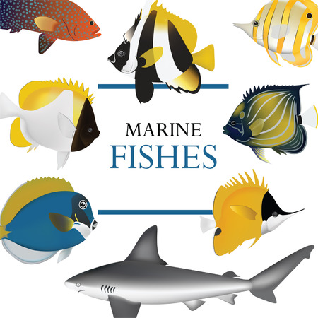 tropical fish collection marine vector illustration Illustration