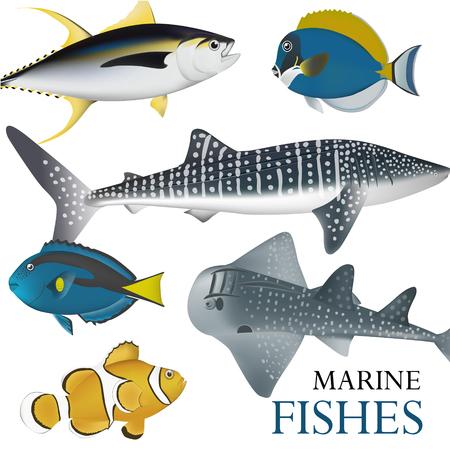 tropical fish collection marine vector illustration Illustration