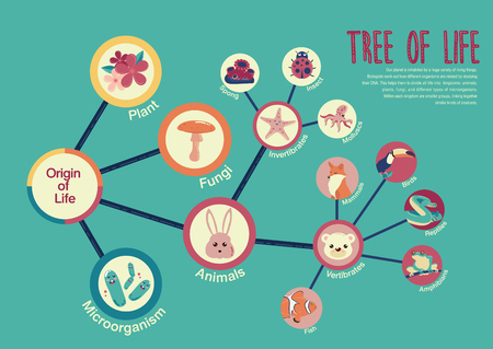 kind of diagram: Tree of life infographic vector illustration